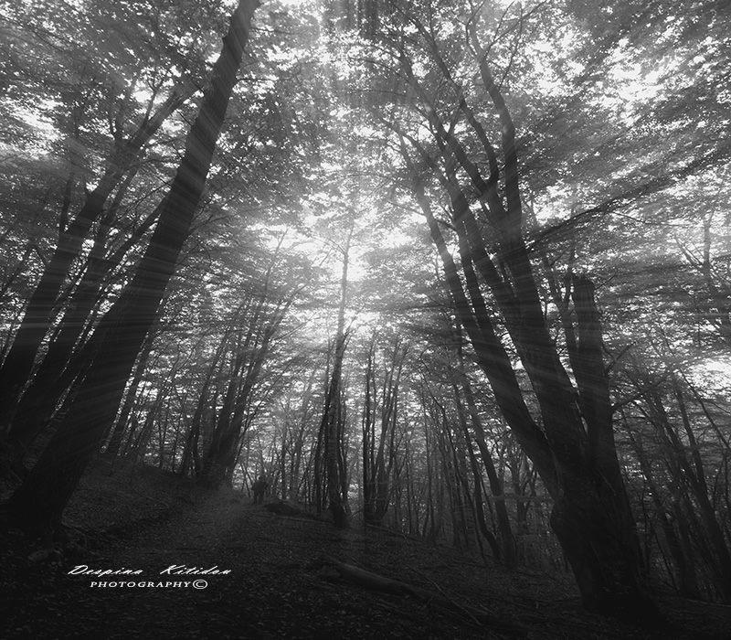 Το Δάσος